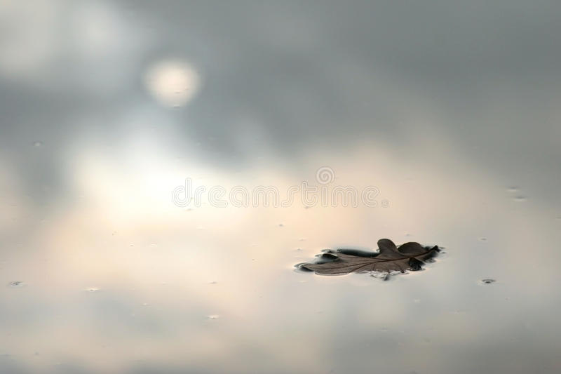 Oak leaf. On the water stock photography