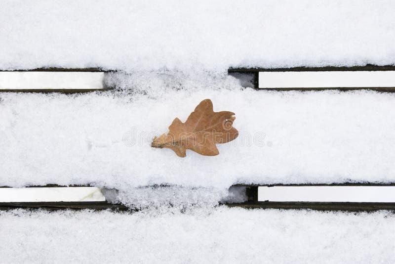 Download Oak leaf in wintertime stock photo. Image of desolate - 8548506