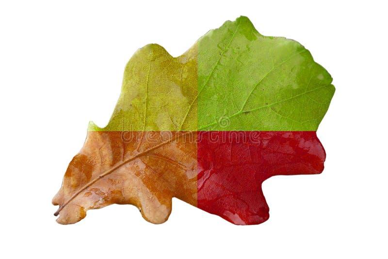 Download Oak leave stock image. Image of botany, forest, plant - 7217339