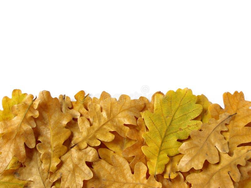 Download Oak leaves border stock image. Image of fall, fallen - 11406255