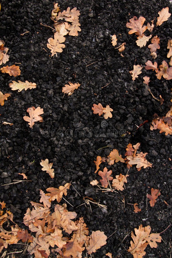 Oak leaves in a pile of black coal royalty free stock photography