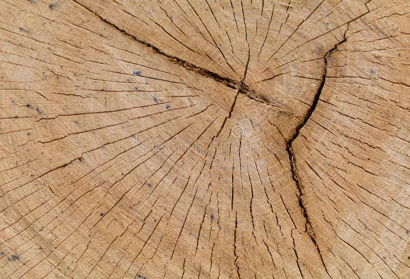 Oak Log Cross Section with Cracks stock photos