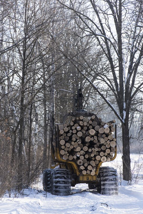 Logging in a central Minnesota forest stock photos