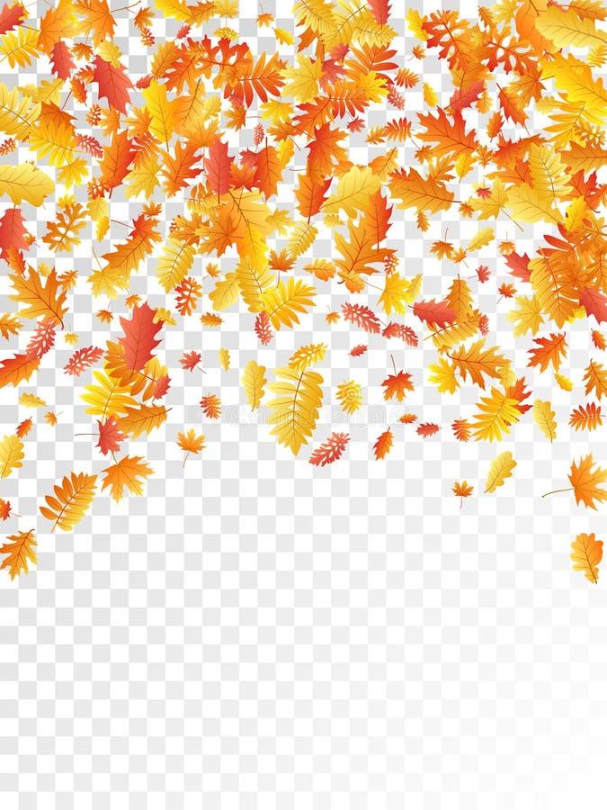 Oak, maple, wild ash rowan leaves vector, autumn foliage on transparent background. royalty free illustration