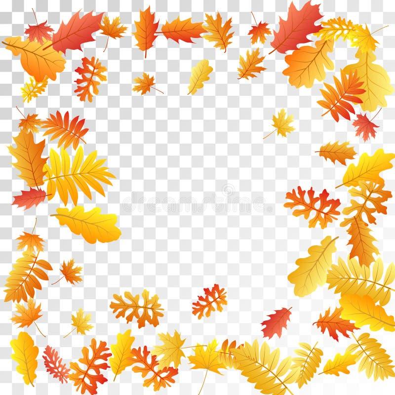 Oak, maple, wild ash rowan leaves vector, autumn foliage on transparent background. vector illustration