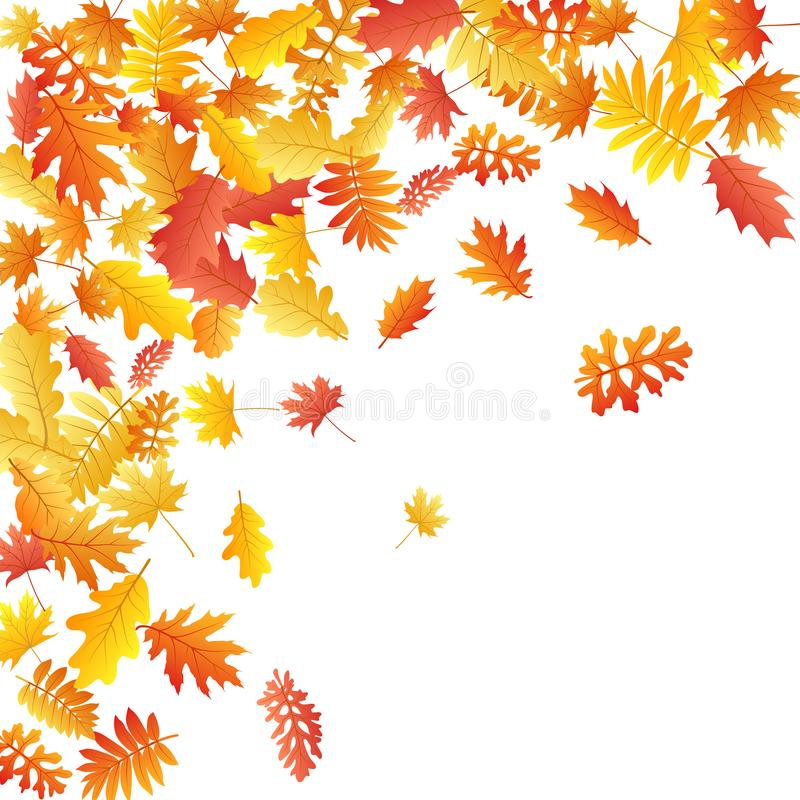 Oak, maple, wild ash rowan leaves vector, autumn foliage on white background. royalty free illustration