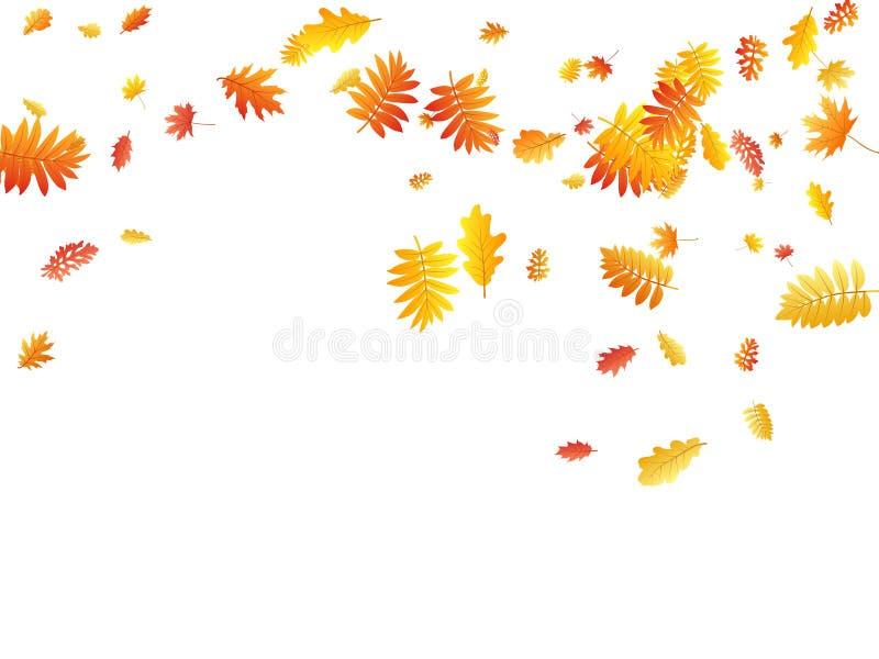 Oak, maple, wild ash rowan leaves vector, autumn foliage on white background. stock illustration