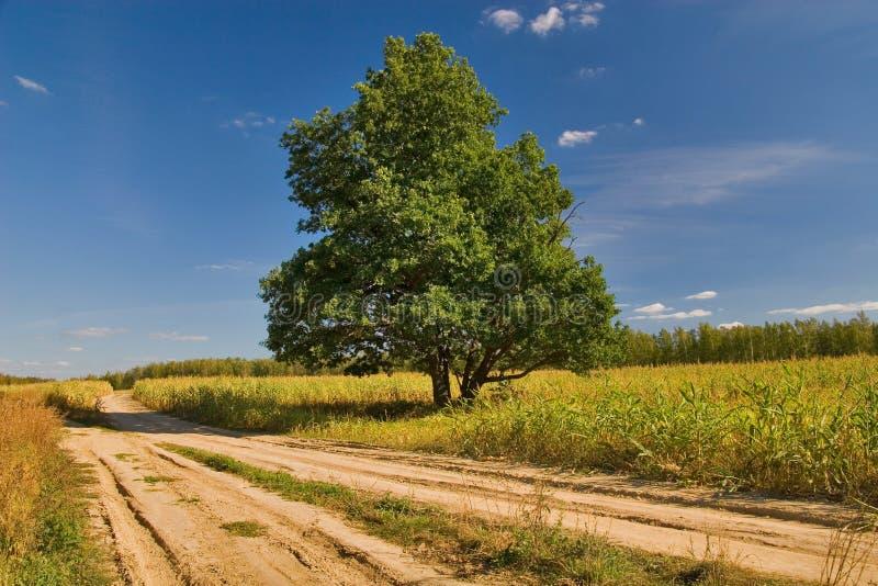 Oak near roads stock photos