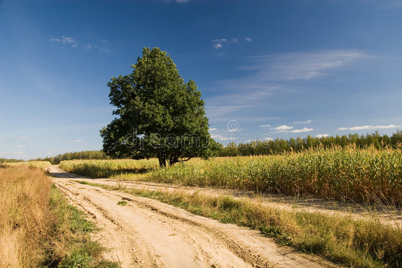Oak and road stock photo