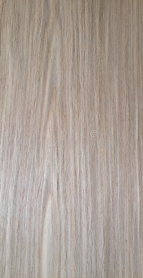 Oak rovere wood, Veneer Pattern brown wooden material finish surface furniture burr texture wall background. Surrounding stock photos