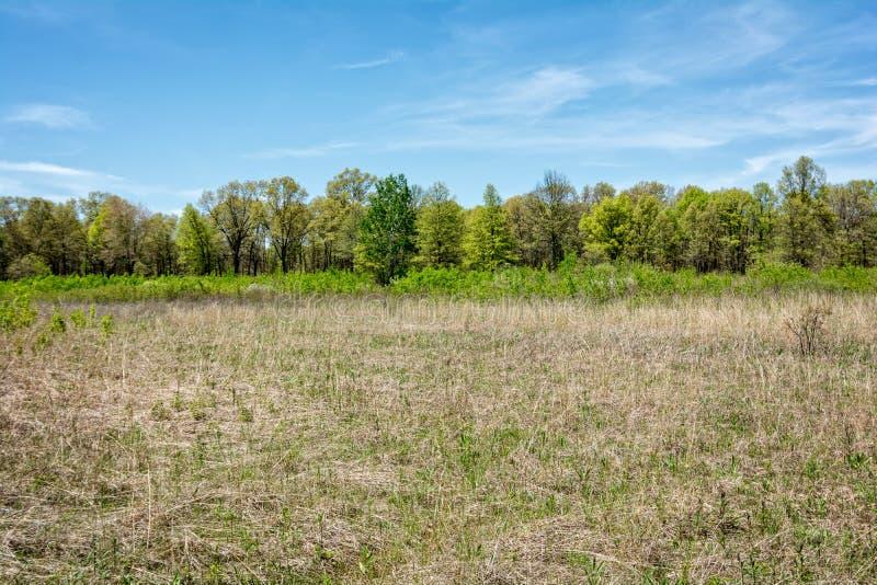 Oak Savanna. A rare oak savanna located at Kitty Todd State Nature Preserve in the Oak Openings region of Northwest Ohio. The Oak Openings region was originally stock photo
