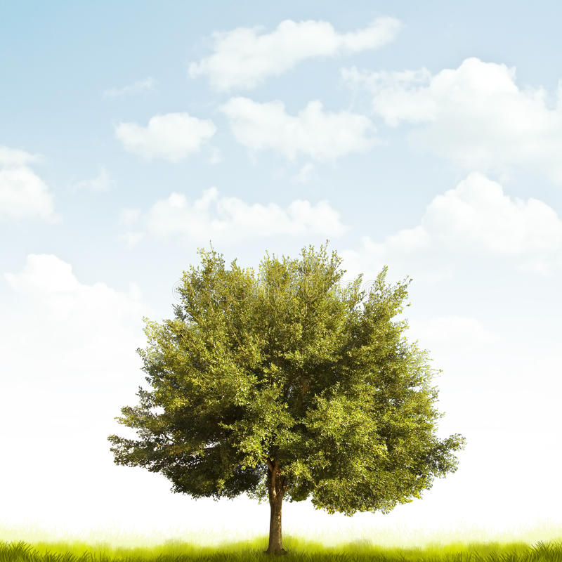 Oak tree. An oak tree placed at the bottom of the page on grass and a a light cloudy sky