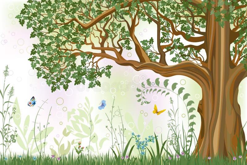 Download Oak tree stock vector. Illustration of ornate, forest - 18209116