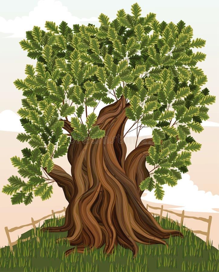 Free Oak Tree Stock Image - 19084331