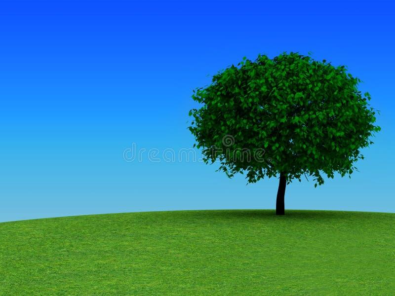 Oak tree stock illustration