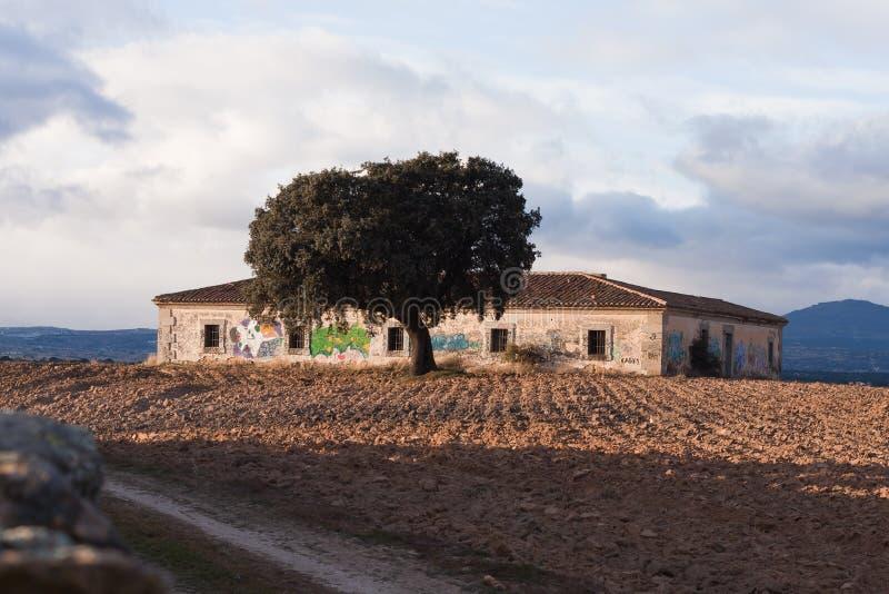 Download Oak Tree stock image. Image of ruins, horizon, views - 23469303