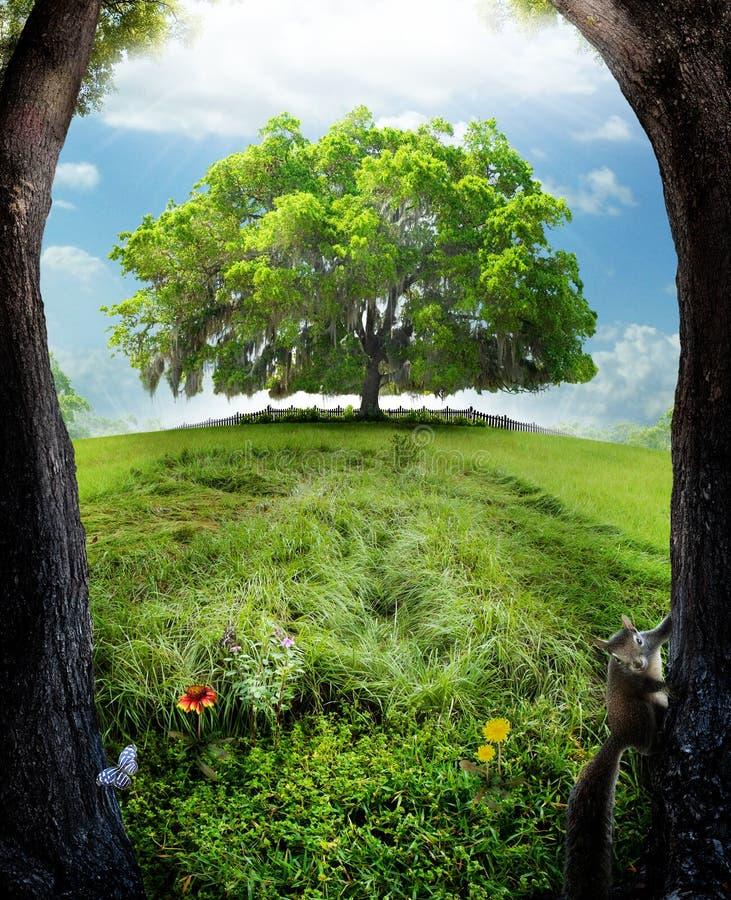 Free Oak Tree Stock Photo - 24221740