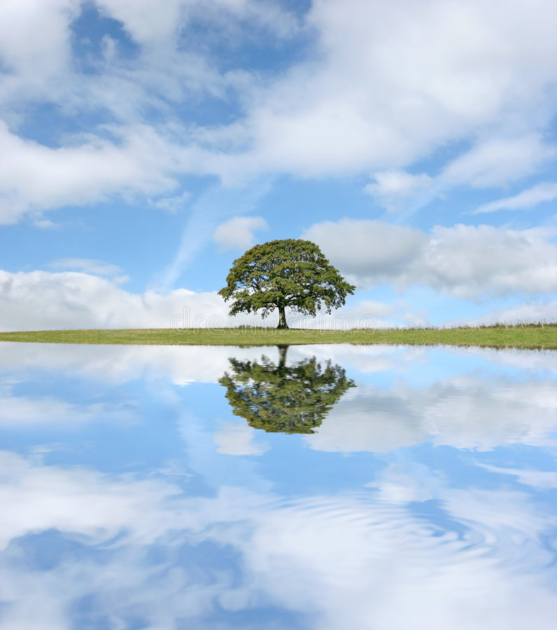 The Oak Tree. Oak tree in leaf in summer against a blue sky, with reflection in water to the foreground royalty free stock photo