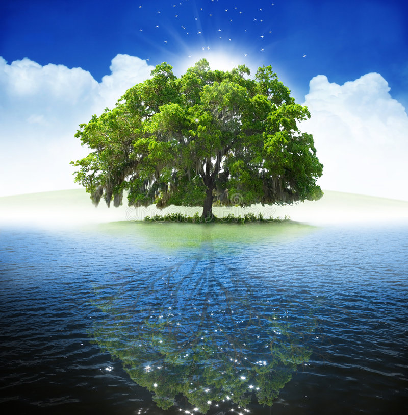Download Oak tree stock image. Image of summer, magical, spirit - 5653067