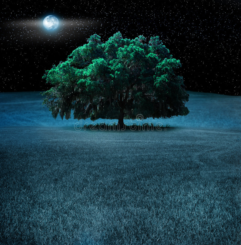 Free Oak Tree At Night Royalty Free Stock Image - 5587916