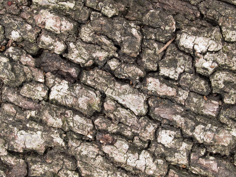 Download Oak tree bark stock image. Image of detail, dried, detailed - 588265
