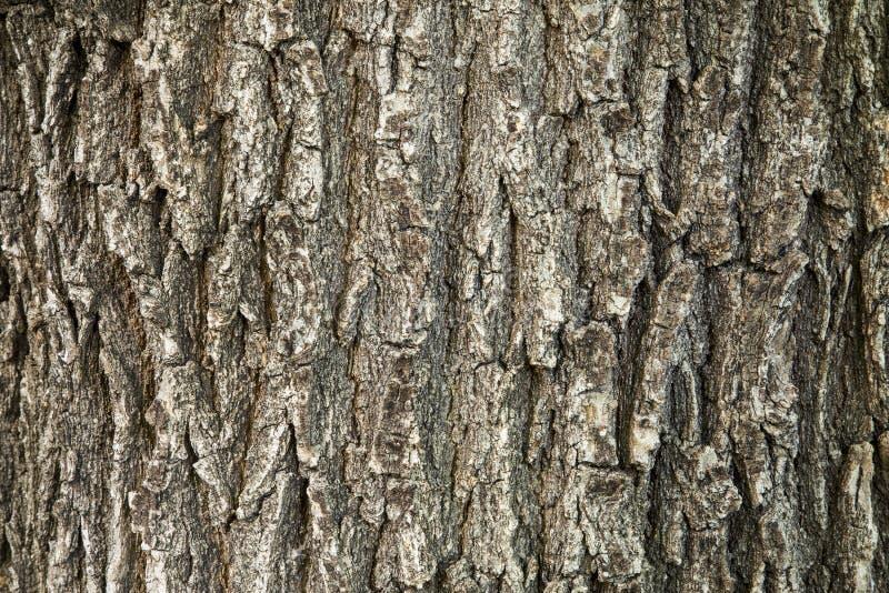 Oak tree bark texture stock image