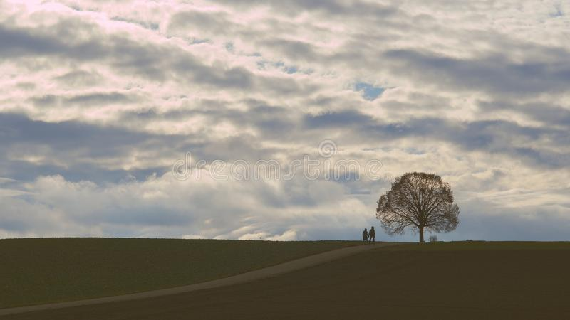 Oak Tree On A Hill In Winter royalty free stock images