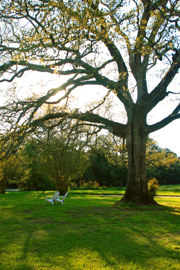 Free Oak Tree In The Spring Stock Photography - 6339782