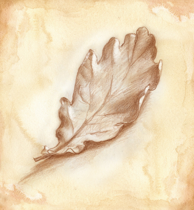 Oak-tree leaf. Artwork hand made with sepia watercolor and brown pencil. Single oak-tree leaf in fall