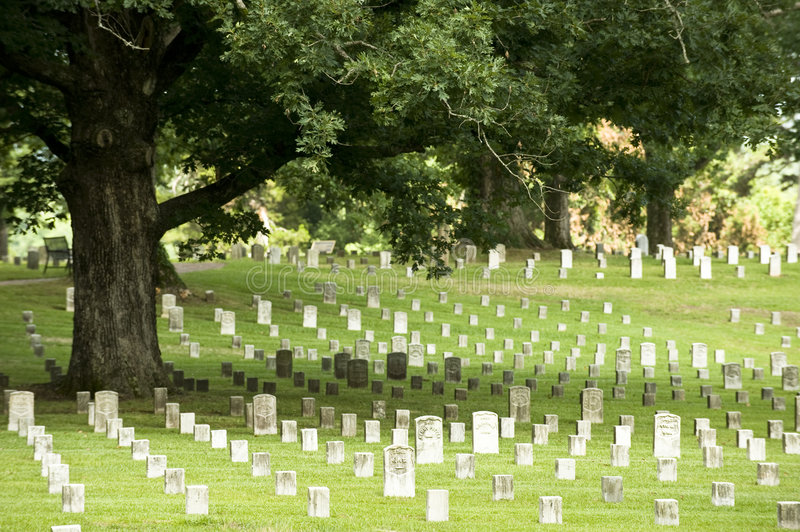 Download Oak Tree In A Military Cemetery Stock Image - Image: 5741255