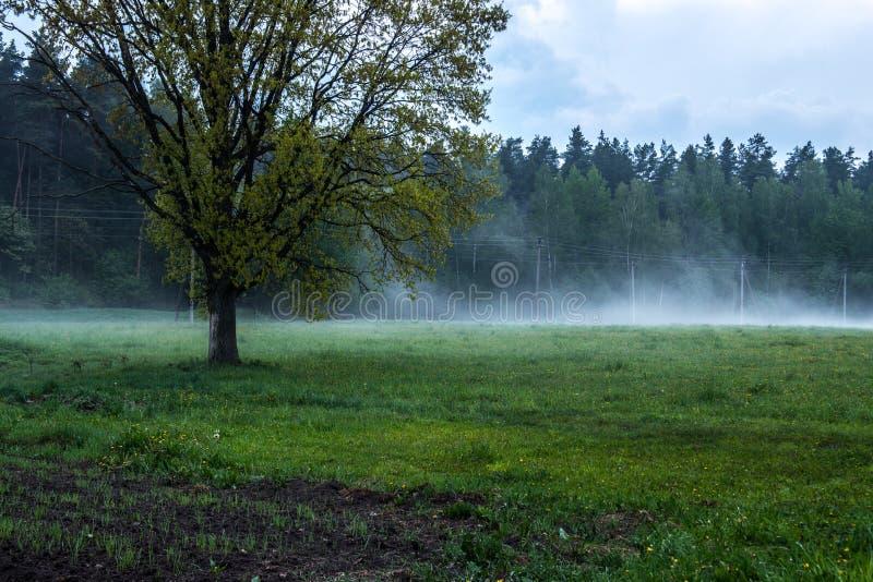 Oak tree near forest stock photo