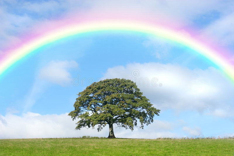 Oak Tree and Rainbow Beauty. Oak tree in summer standing alone in a field, against a blue sky with clouds and a rainbow royalty free stock images