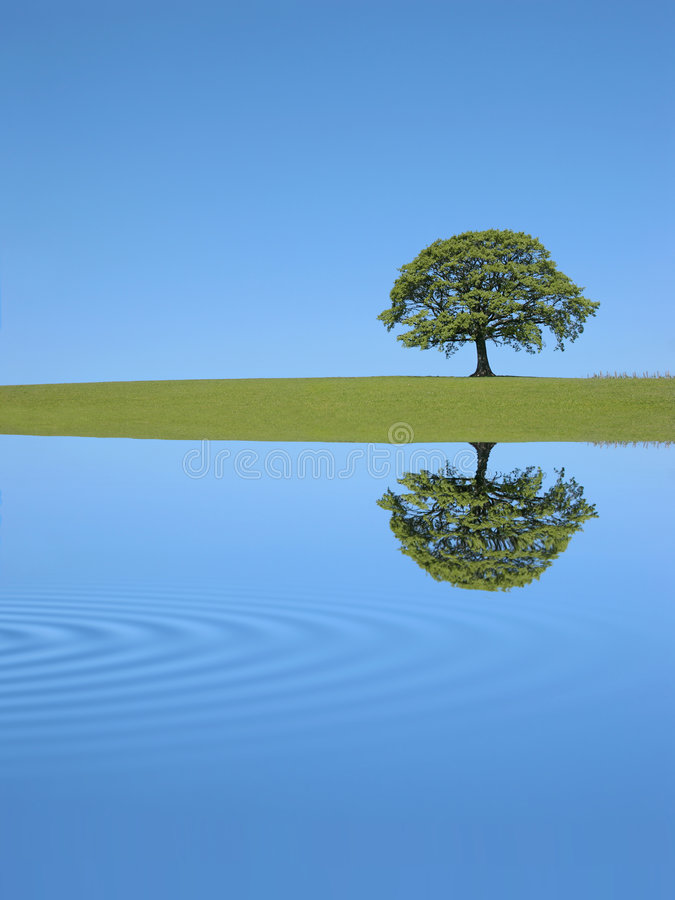 Oak Tree Reflection. Oak tree in full leaf in summer in a field, with reflection over rippled water, against a clear blue sky royalty free stock photography