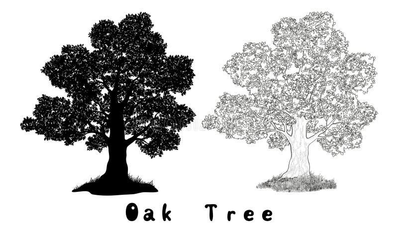 Oak Tree Silhouette, Contours and Inscriptions vector illustration