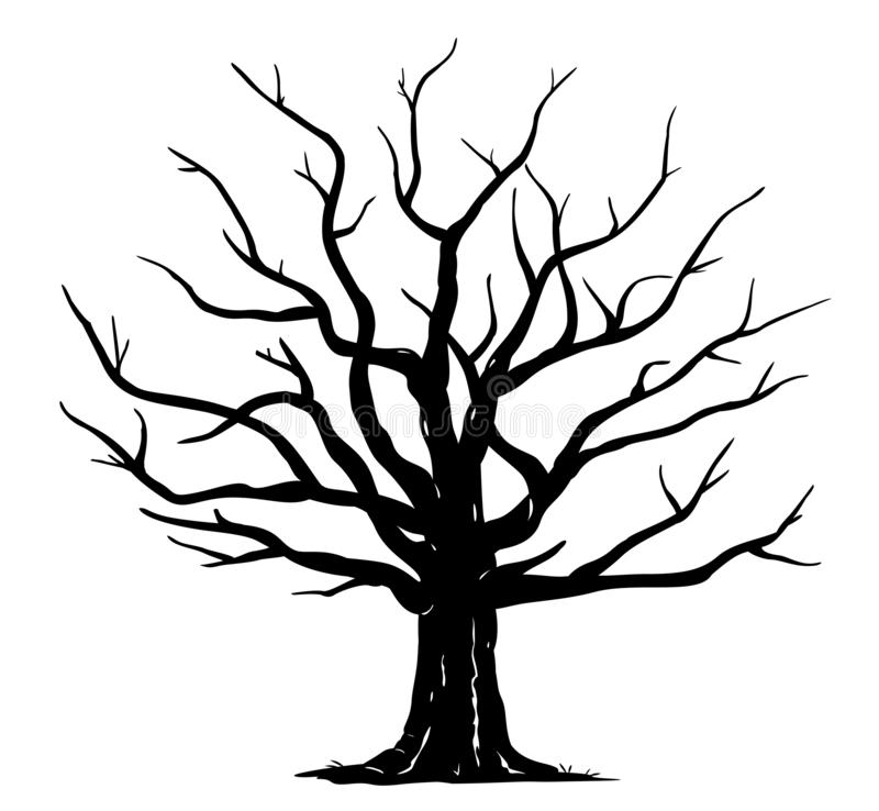 Free Oak Tree Silhouette Isolated Stock Photography - 160549652
