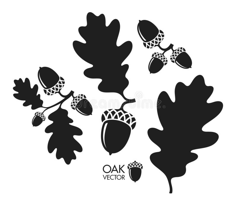 Oak tree. Silhouette. Isolated acorns and leaves on white background. Vector illustration EPS stock illustration