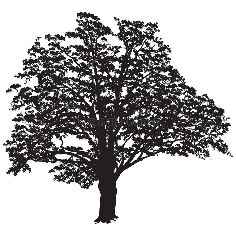 Oak tree silhouette with leaves in the black-and-white vector image vector illustration
