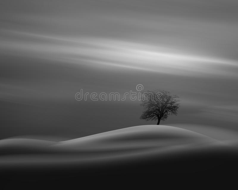 Oak tree silhouette in strong wind, on hill, against dramatic sky background. stock images