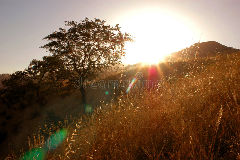Download Oak Tree With Spirit stock image. Image of nature, morning - 245103