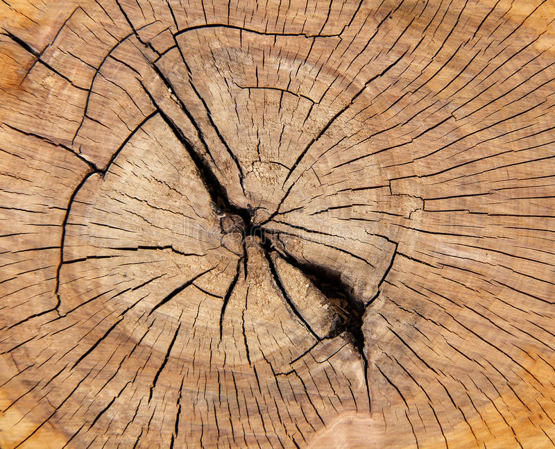 Oak tree texture close up royalty free stock photography