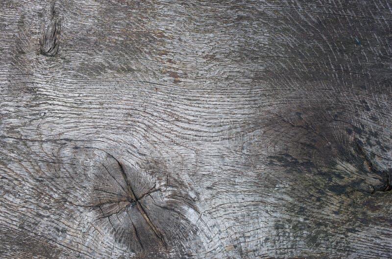 Oak tree texture royalty free stock image
