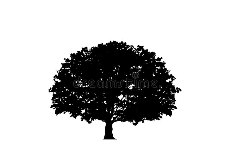Oak tree vector, logo illustration. Vector silhouette of a tree isolated or white background vector illustration