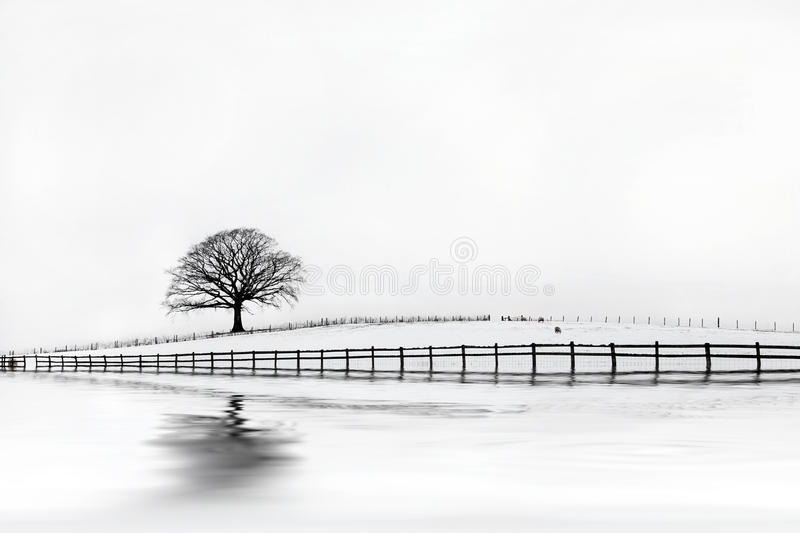 Oak Tree Winter Beauty. Oak tree in a field of snow in winter with an old wooden fence and a pale grey sky with reflection stock images