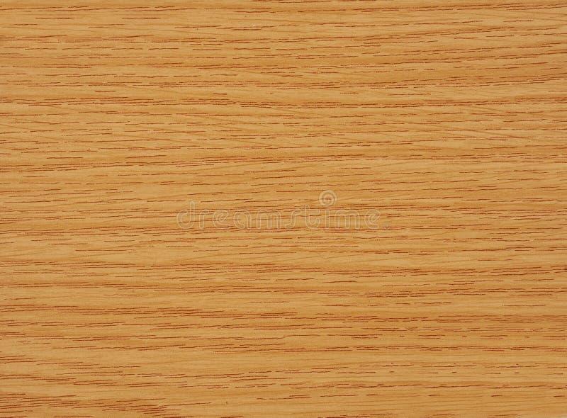 Oak tree wood stock photo