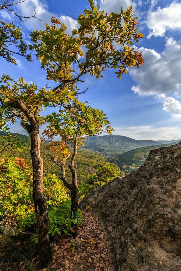 Free Oak Trees On Brink Of Plancheskiye Rocks At Sunset. Scenic Sunny Blue Sky Golden Autumn Vertical Landscape Of Caucasus Mountain Royalty Free Stock Image - 156871506