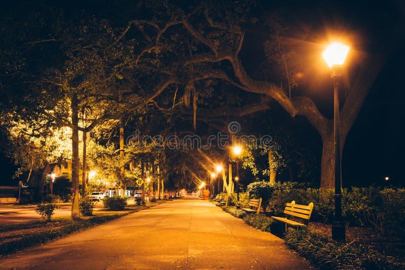 Oak trees and path at night in Forsyth Park, Savannah, Georgia. stock photo