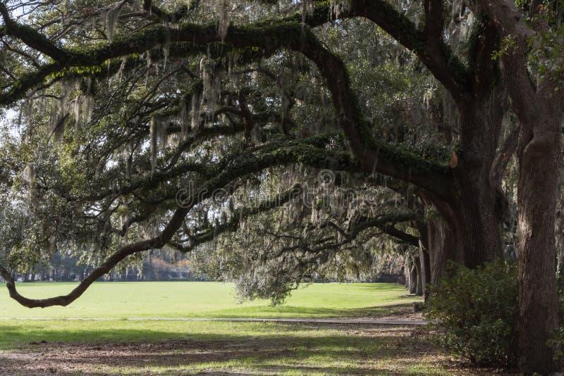 Oak Trees with Spanish Moss, Forsyth Park, Savannah, Georgia royalty free stock photos
