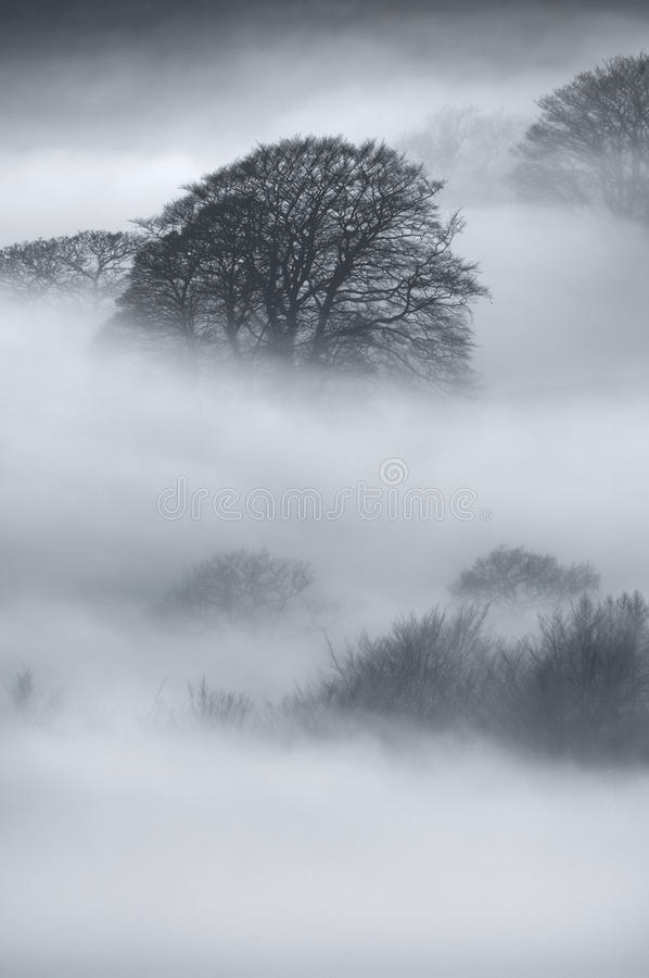 Download Oak Trees in thick fog stock photo. Image of hathersage - 25237100