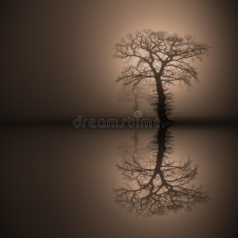 Oak Trees In Thick Fog Reflected In Water Stock Image