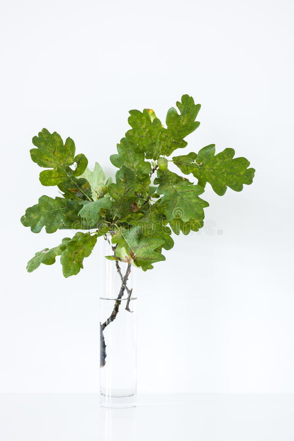 Oak twig in vase stock photo